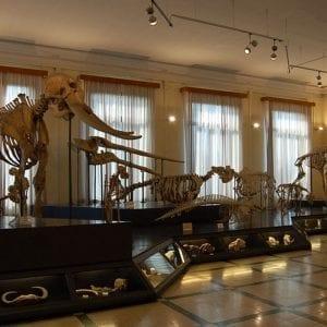 מוזיאון זואולוגיה ברומא